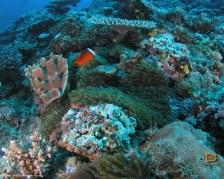 Sfondi gratis dalle Fiji - Le Yasawa sott' acqua