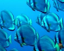 Pesci nel mare di Kadvu