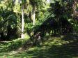 Giungla  nel giardino delo Sleeping Giant