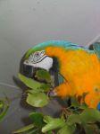 pappagallo del Kula Eco park
