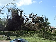 Il ciclone Mick ha sradicato molti alberi a Lautoka