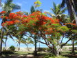 Une dei Flame tree al Musket Cove Resort, Mamanuca