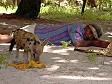 Kana moce = riposino dopo pranzo alle Fiji